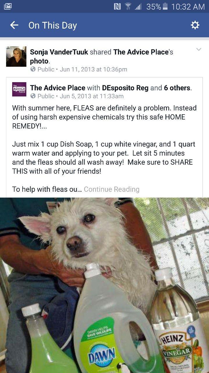 Pin By Sonja Vandertuuk On Animals Dog Flea Remedies Flea Bath