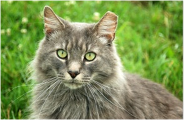 Things are looking up for feral cats in Jersey City's