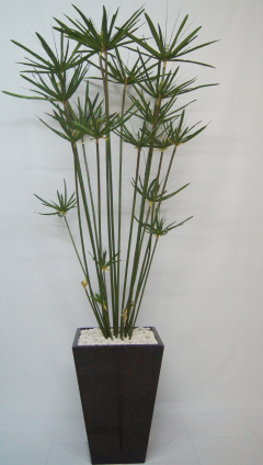 papiro planta - Buscar con Google