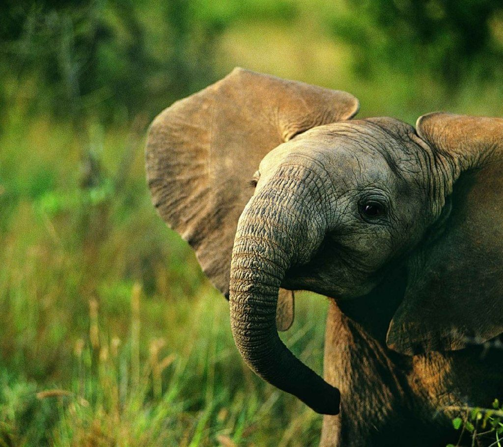 Download Baby Elephant HD Wallpapers For Desktop