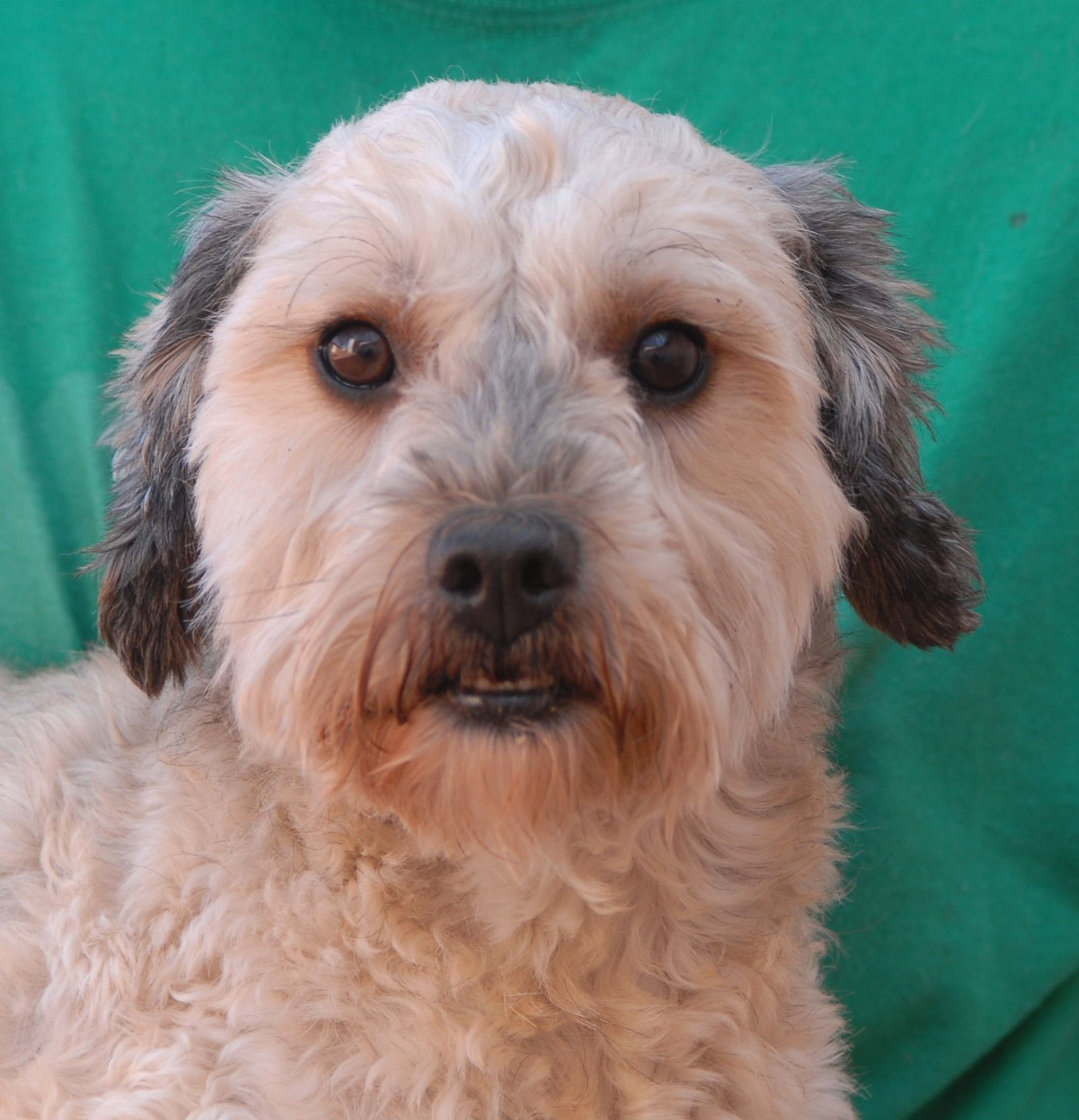 Donatello, a remarkably attractive boy debuting for