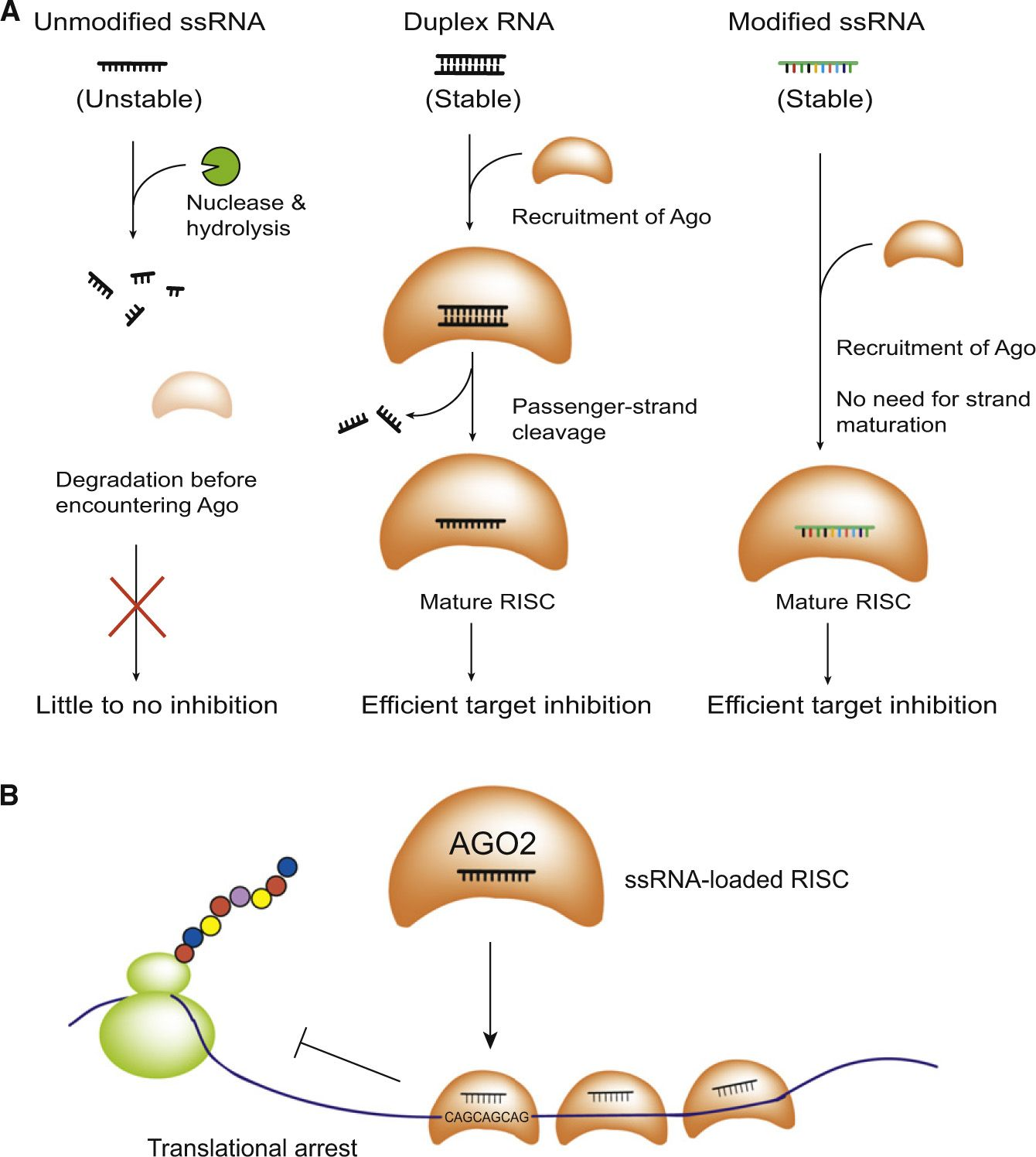 Huntington's Disease Society of America - new gene ...
