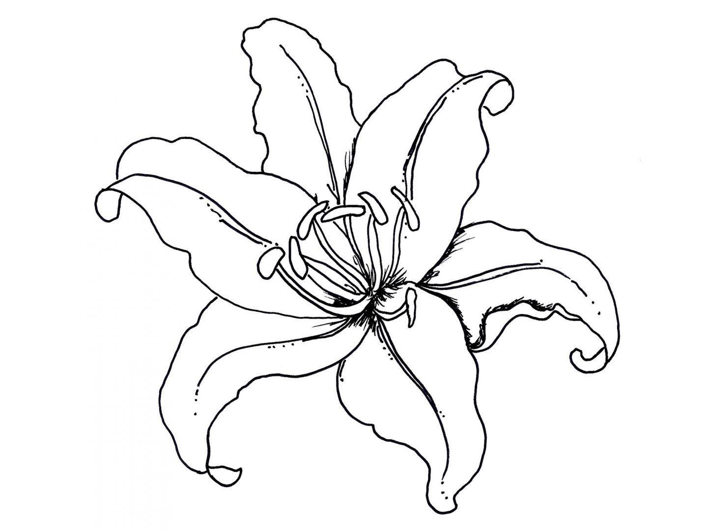 plantillas de flores para colorear   Inglés   Pinterest   Plantilla ...