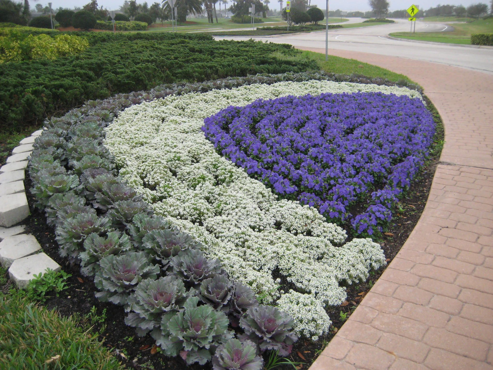 Pansies Sweet Alyssum Cabbage Fall Container Gardens Home Landscaping Front Yard Landscaping