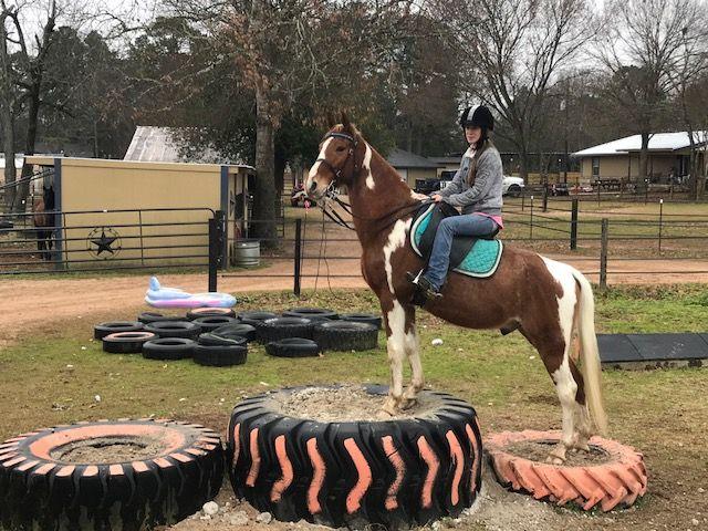Tennessee Walking Horses - CLOUD 9 WALKERS (Tennessee