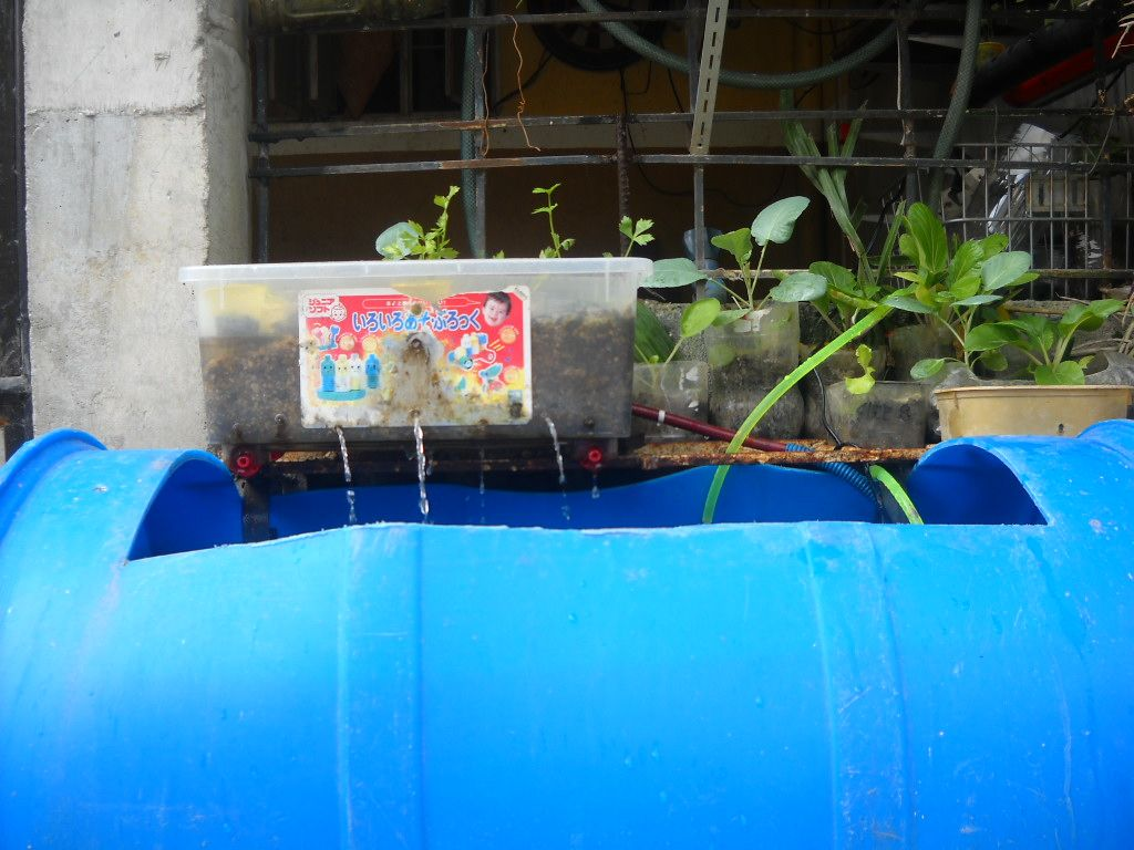 back yard fish farming philippines aquaponics a system of