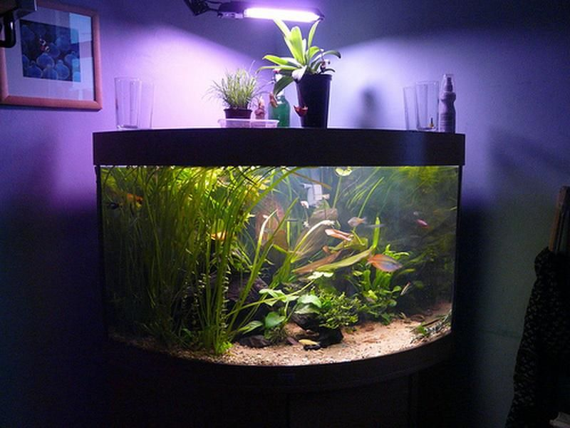 Good Aquarium Decorations Design ~ Http://monpts.com/some Consideration