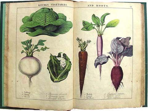 Antique Garden Book Abe S Books How Fun Vegetable Prints Gardening Books Vintage Gardening