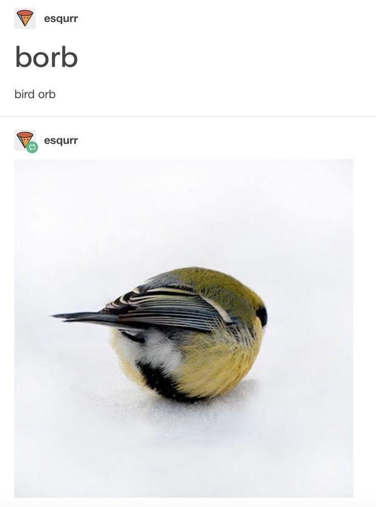 17 Bird Memes To Beak Your Interest #funnypictures