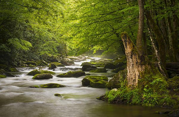 Great Smoky Mountains Landscape Photography by Dave Allen