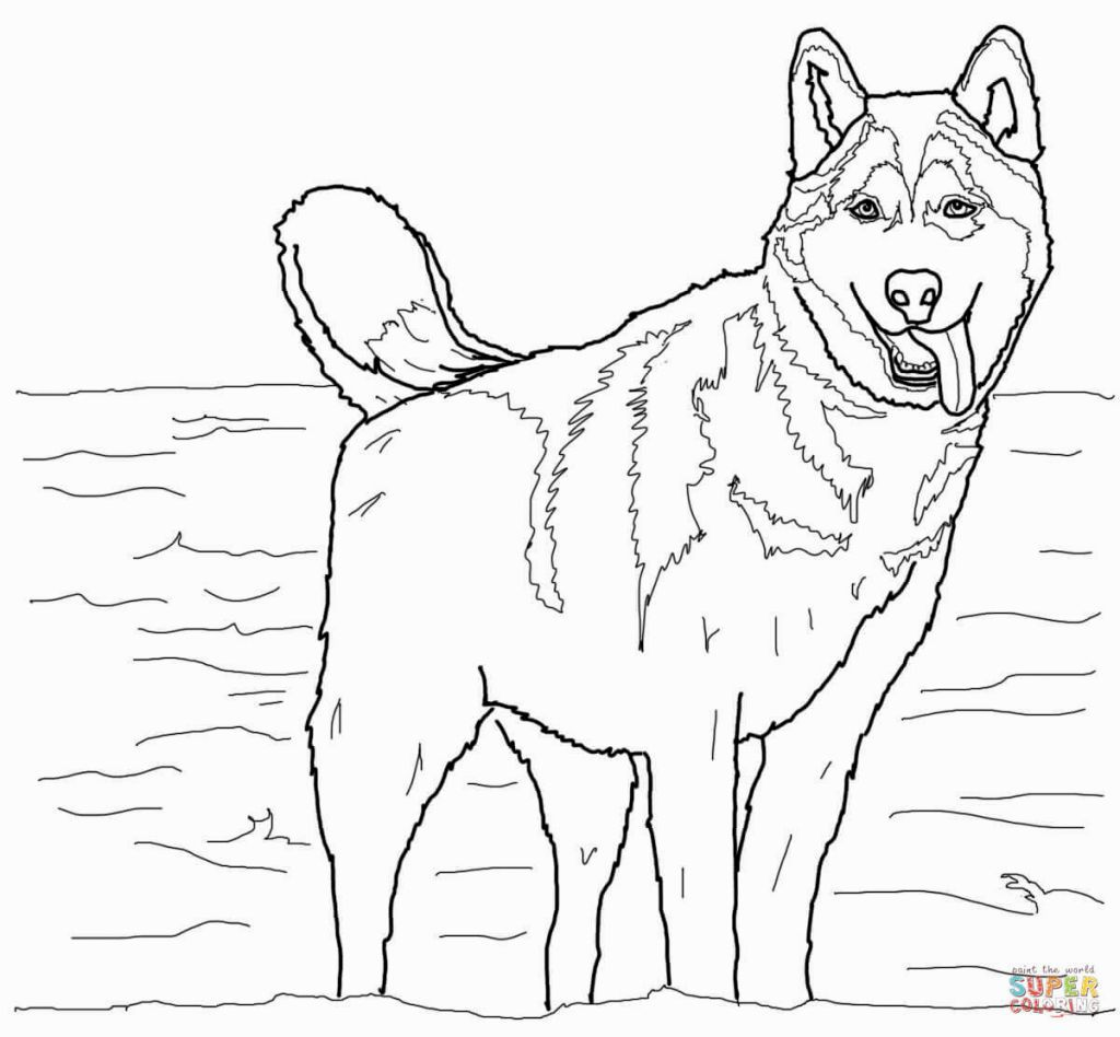 Siberian Husky Coloring Pages  Dog coloring page, Puppy coloring