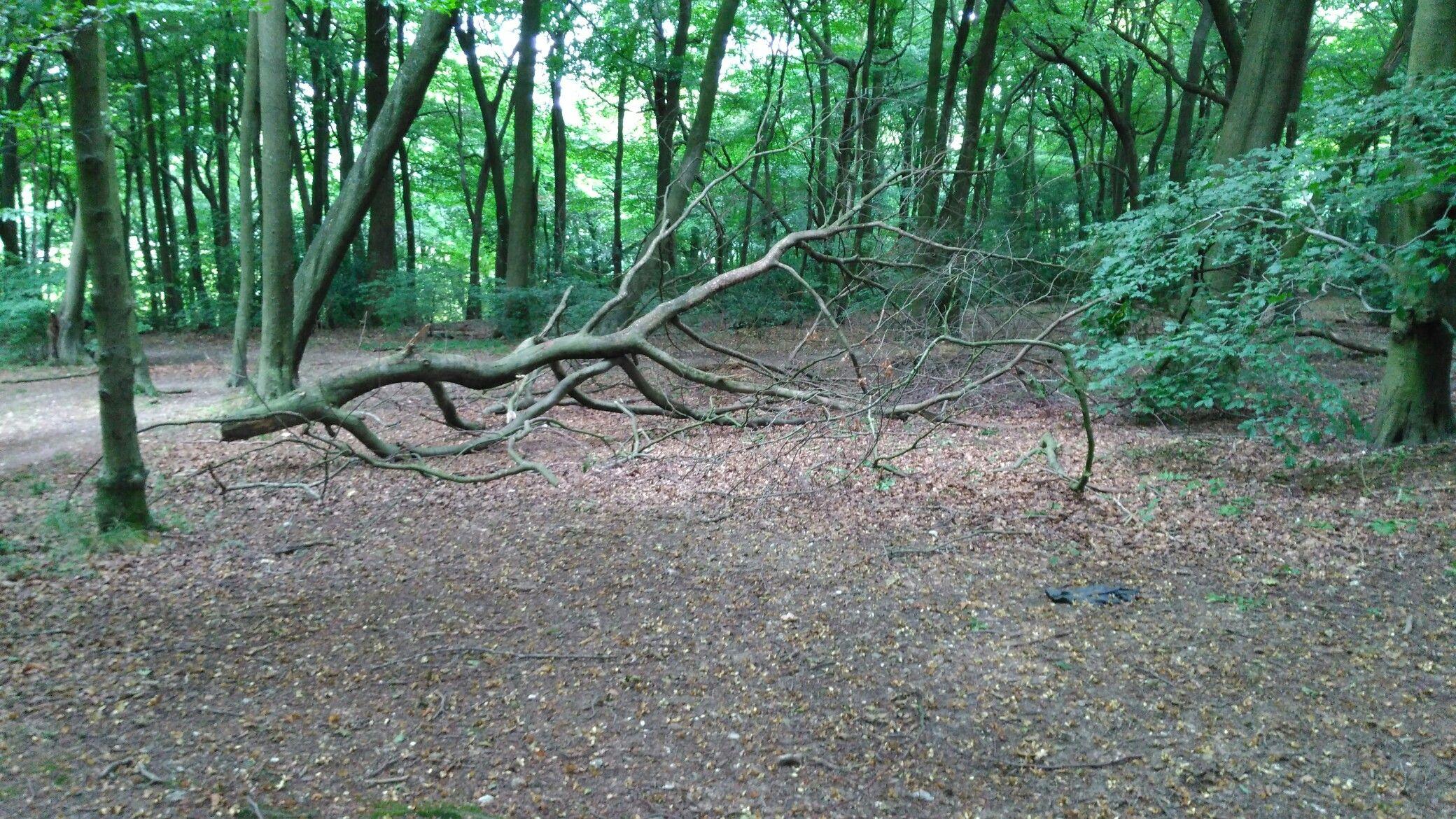 Fallen tree branch | Autumn trees, Midsummer nights dream ...