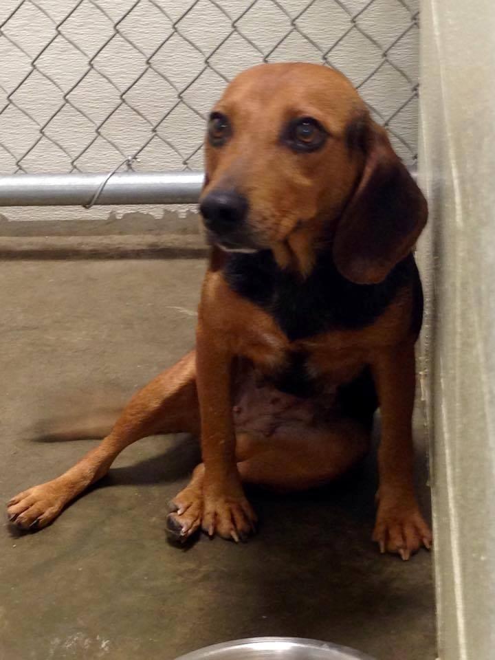 15+ Stokes county animal shelter ideas
