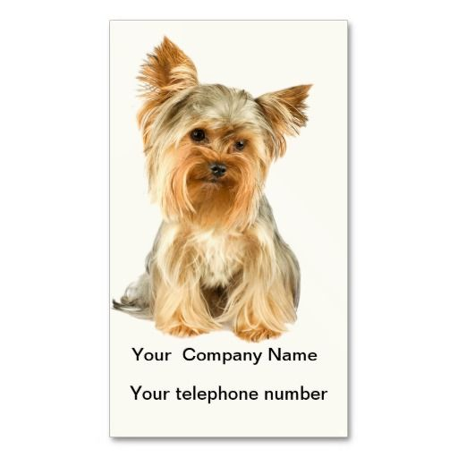 Yorkshire terrier dog photo business card yorkshire terrier dog yorkshire terrier dog pet business card click image to add your text to both sides reheart Choice Image
