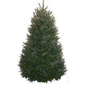 6-7-Ft Fresh Fraser Fir Christmas Tree 93446 | Christmas ...