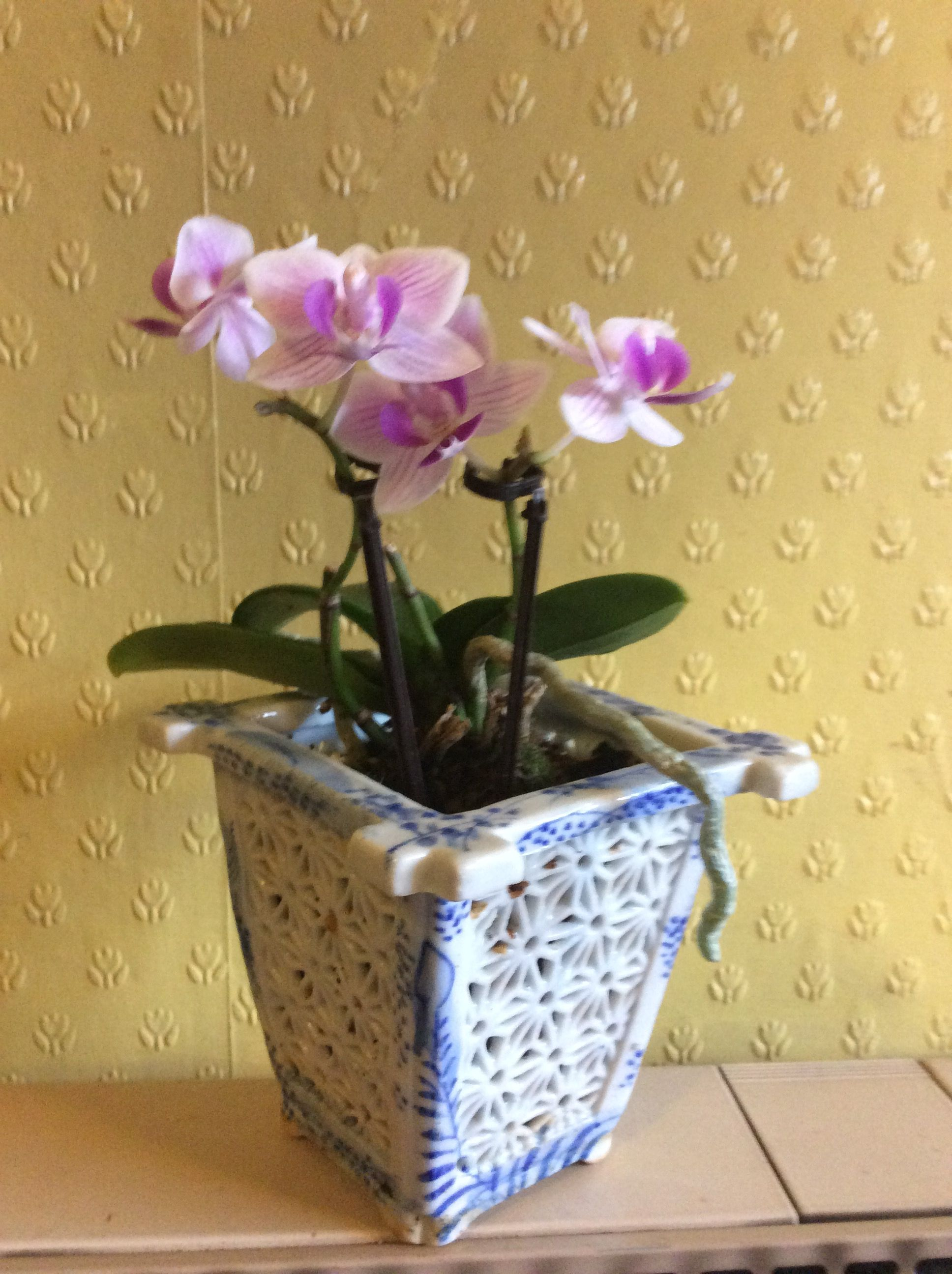 Orchid in antique orchid pot Roger Exeter (With images ...