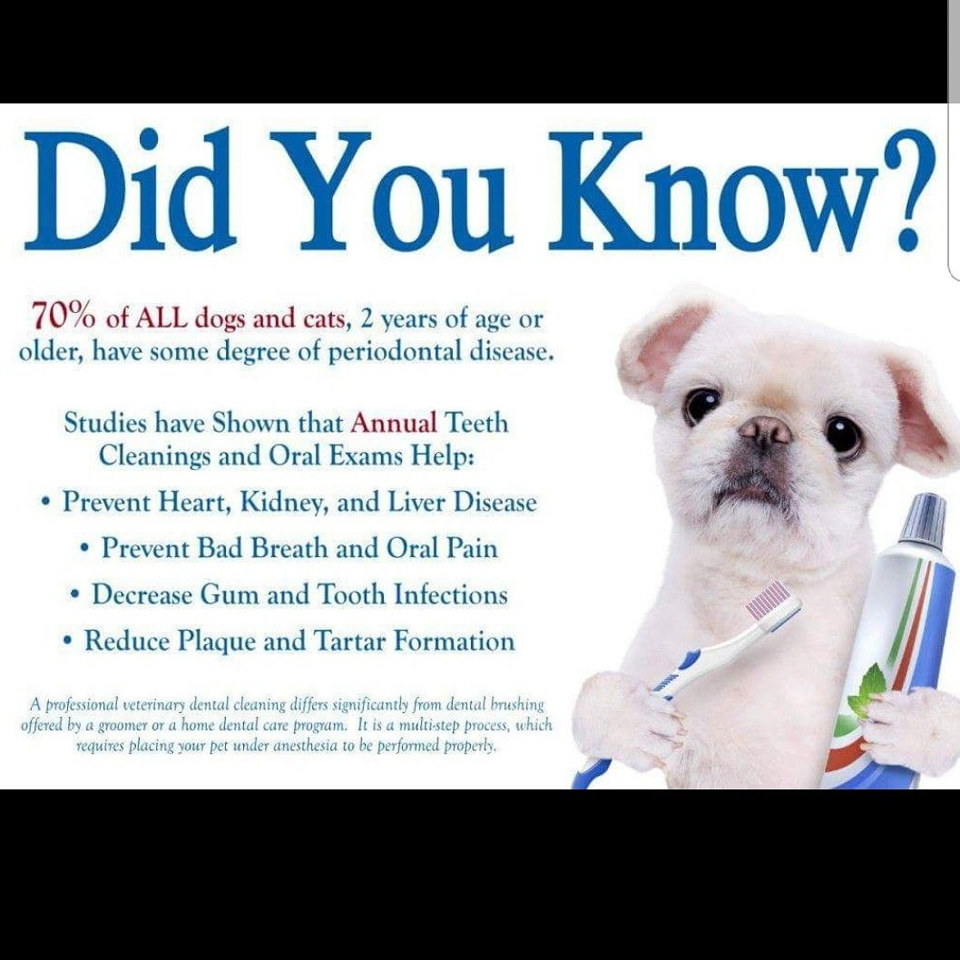 Did You Know Call Us Or Text Us If You Are In The Phoenix Metro Area For A Dental Checkup Pecangrovevet Com Periodontitis Periodontal Disease Pet Hacks