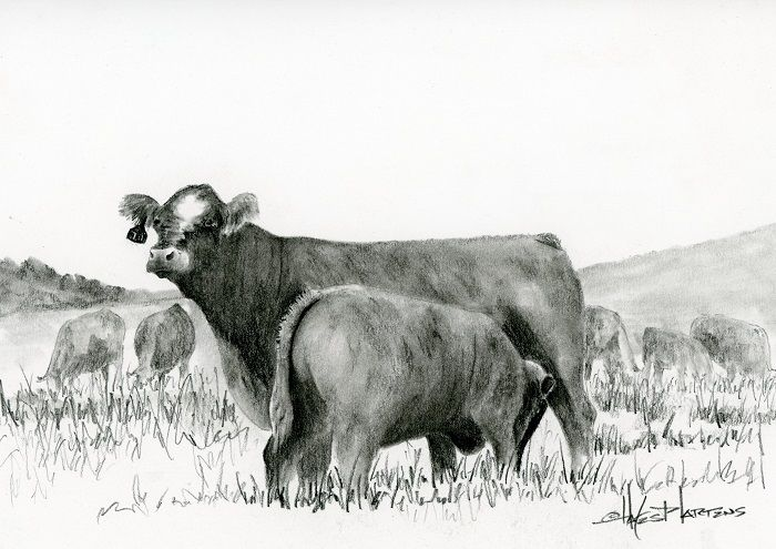 simmental cow calf see more 365in2014 sketches at www
