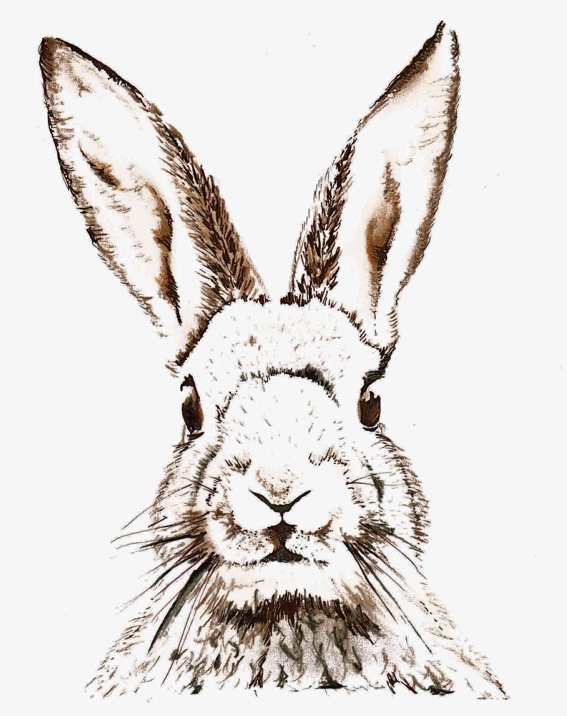 pink rabbit sketches free easter printable vintage clip art maggie holmes design [ 1807 x 2283 Pixel ]