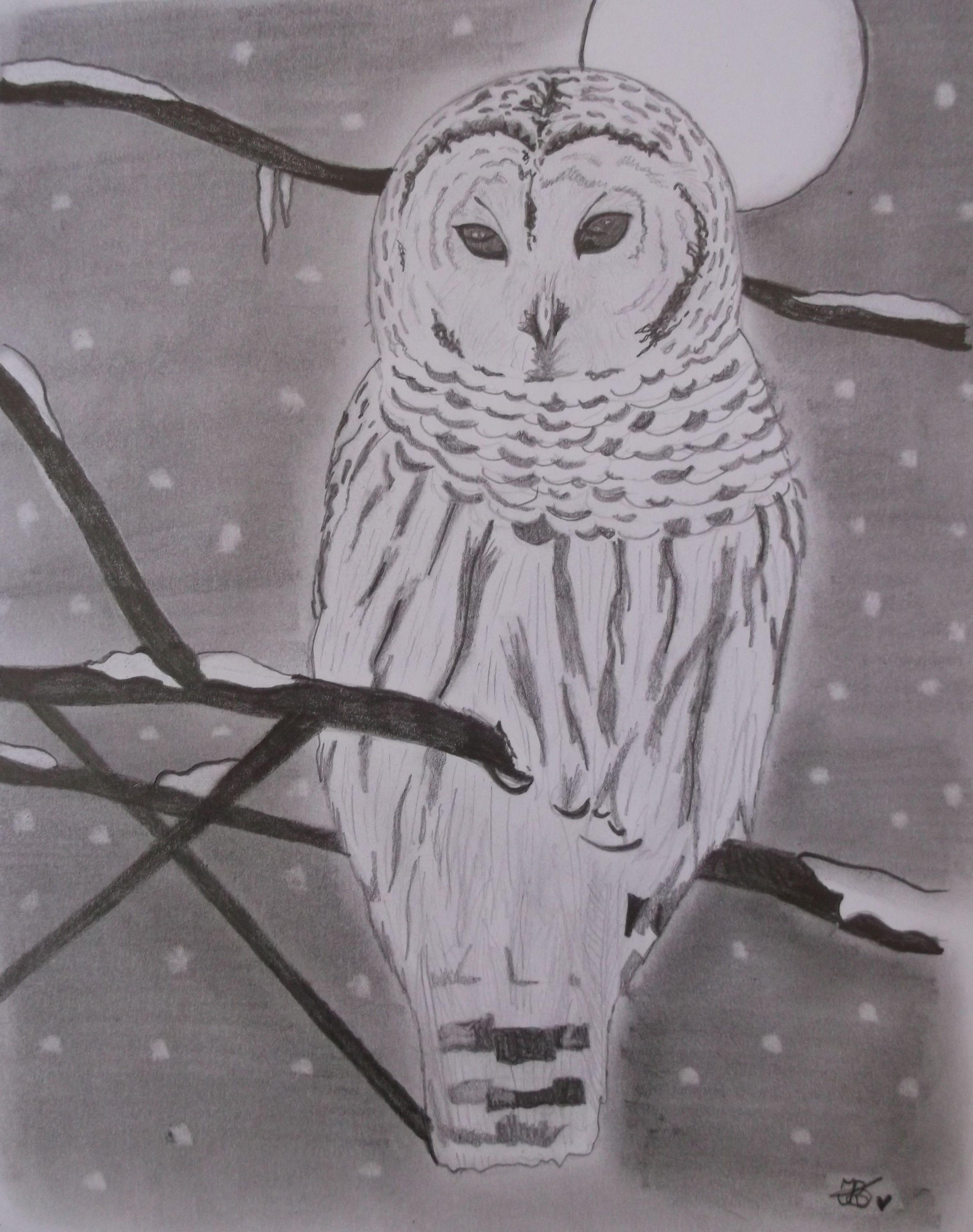 Portrait: Winter White Owl....xxx