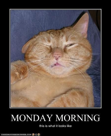 Monday Morning Morning Jokes Funny Monday Pictures Funny Cat Pictures