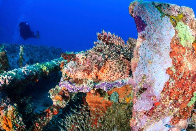 34 Objek Wisata Unggulan Di 34 Provinsi Di Indonesia Taman Nasional Indonesia Objek