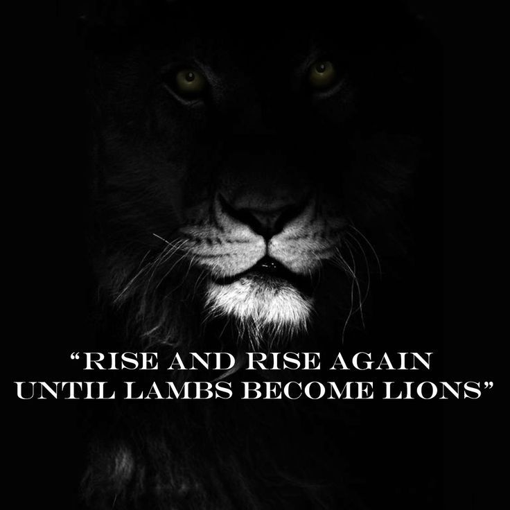 rise and rise again Google Search Lion quotes, Great