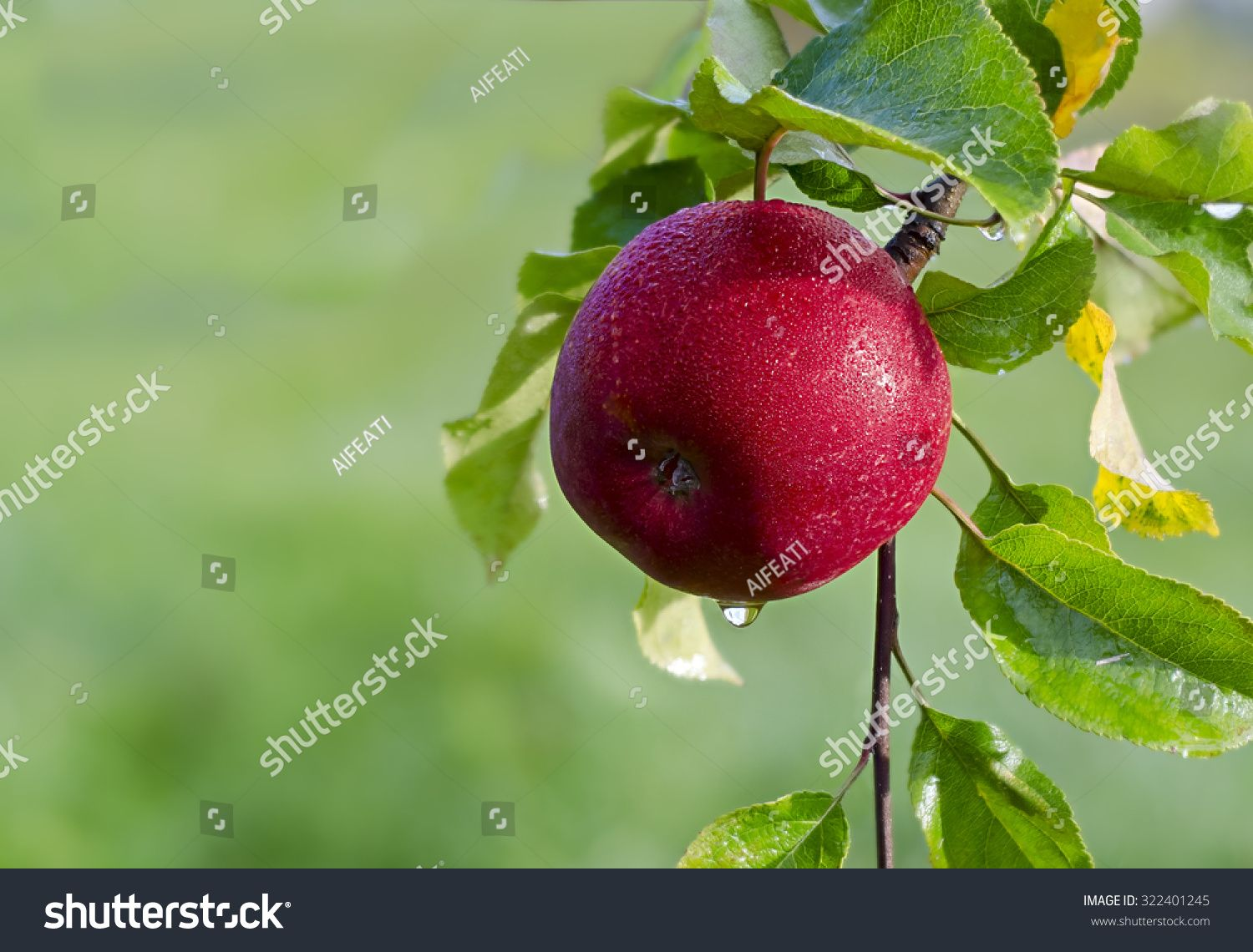 Juicy apple in the garden Ad Sponsored Juicyapple