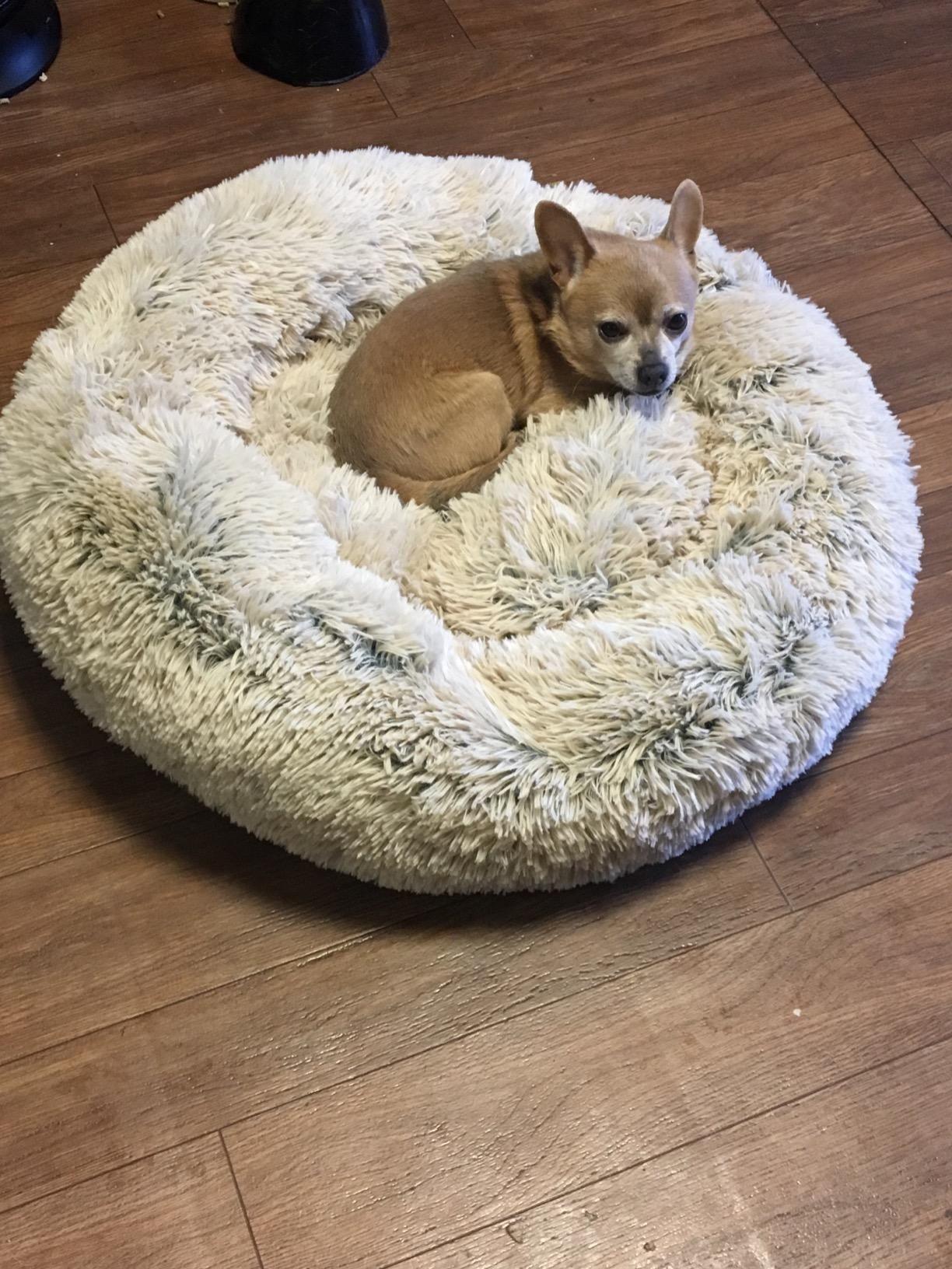 "The Original Calming Shag Vegan Fur Donut Cuddler™ 30""x30"