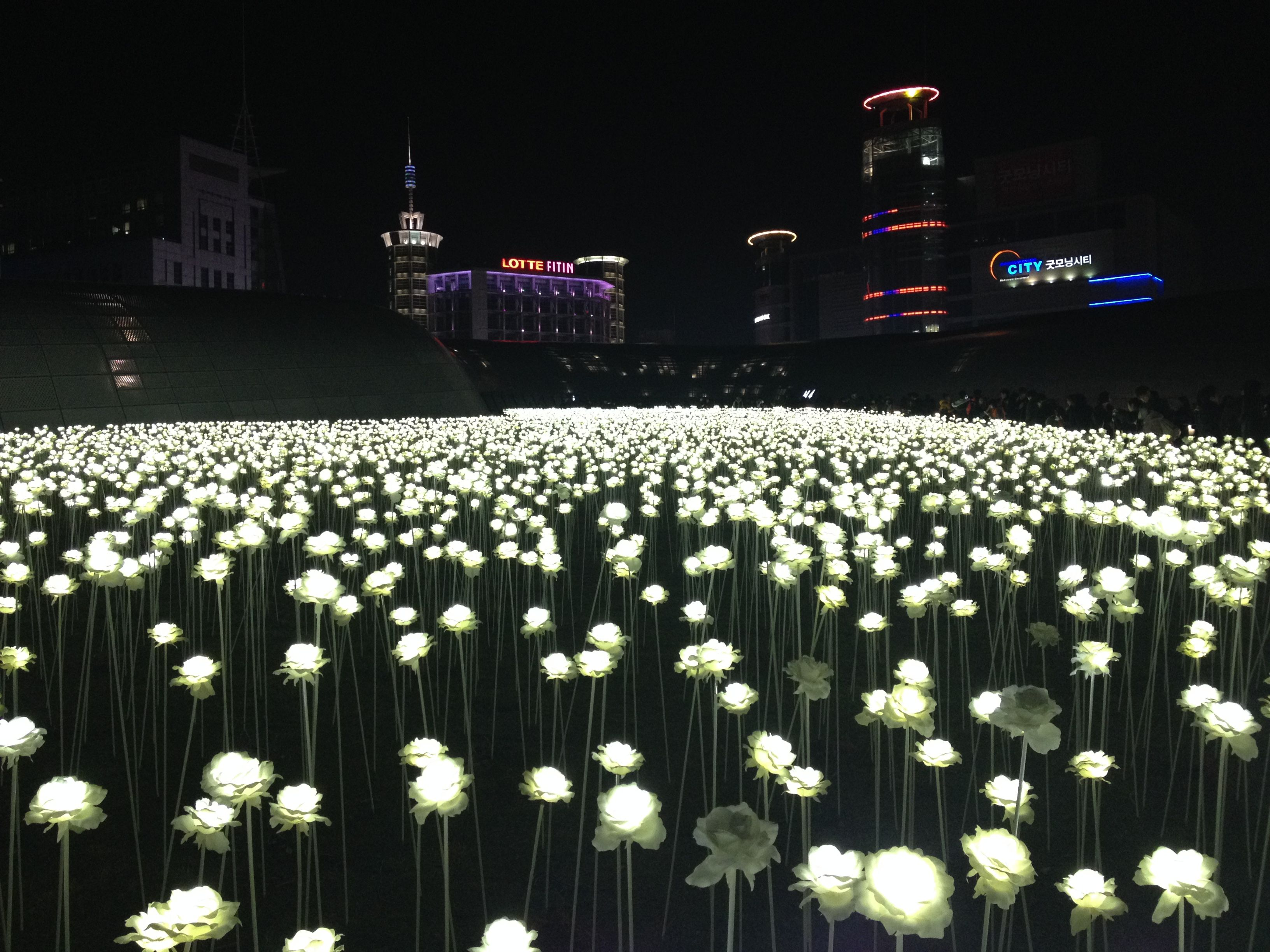 Ddp Led Rose Garden