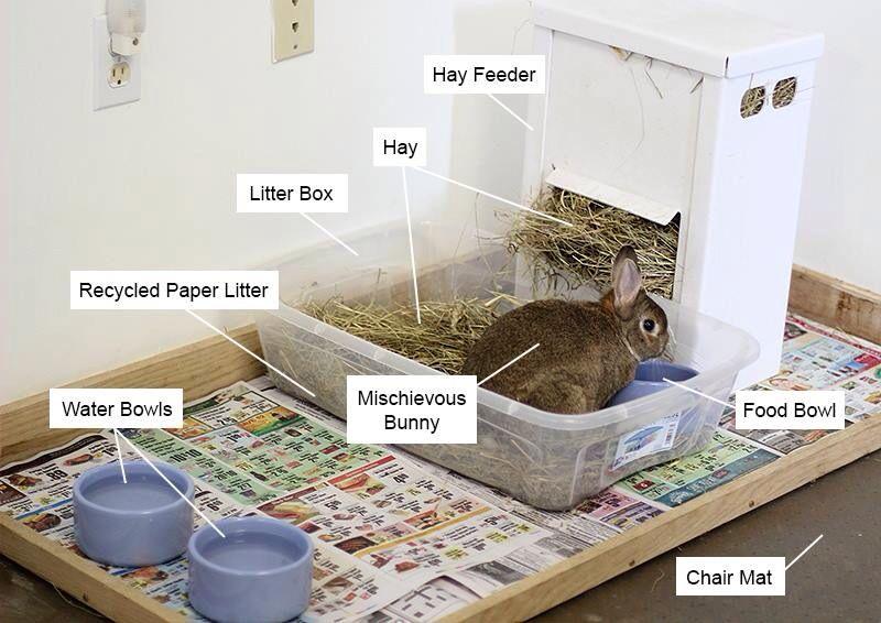 House Bunny Essentials Rabbits House Rabbit Pet