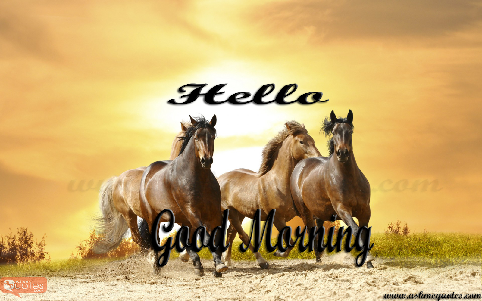 GOOD MORNING QUOTES WITH HORSES - Google Search | days of ...