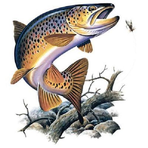 Image result for brown trout jumping