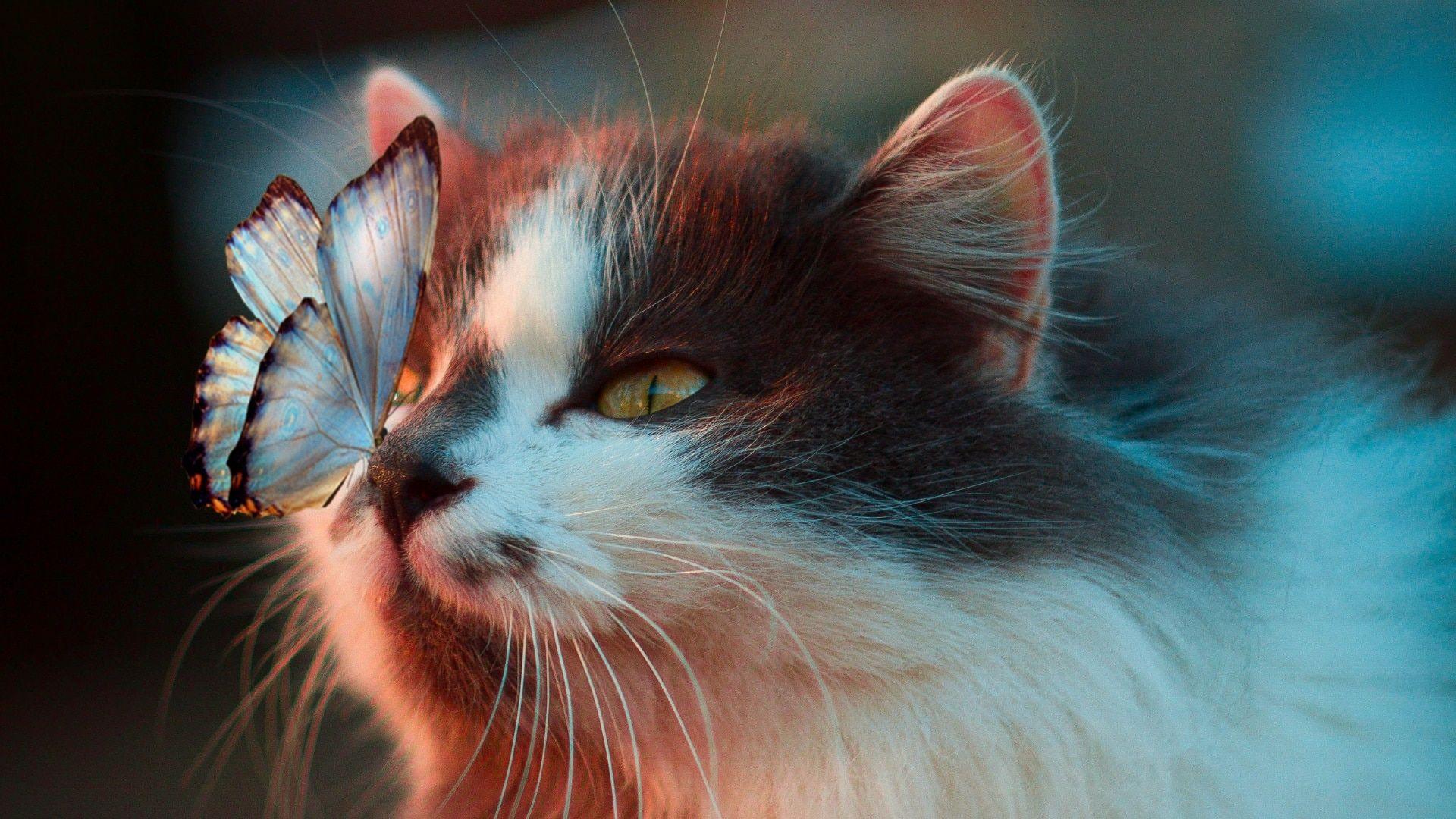 Chat Papillon Cat Butterfly Voyage Onirique En 2020 Fond D Ecran Chat Animaux Mignons Animaux