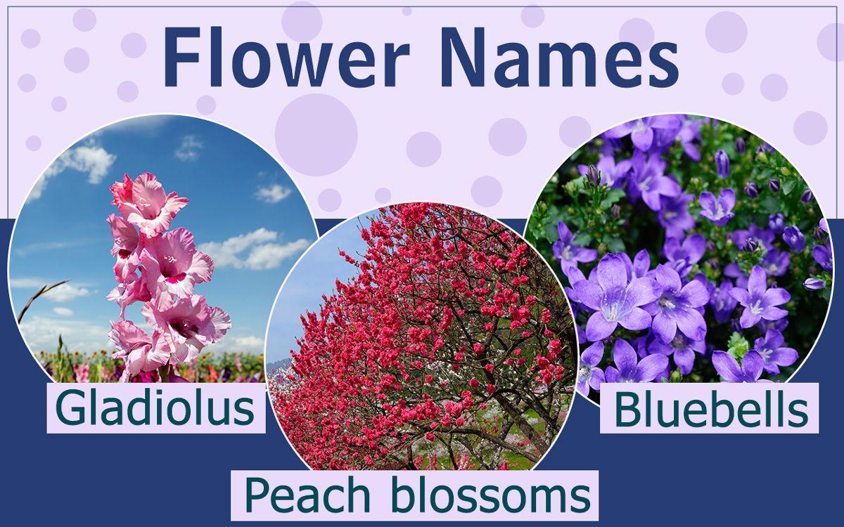 List of Flower Names Flowers name list, Flower names