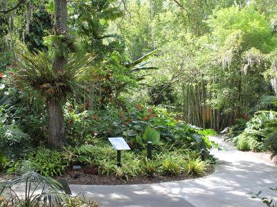 Selby Botanical Gardens Sarasota Fl Must Do Visitor Guides Botanical Gardens Urban Garden Public Garden