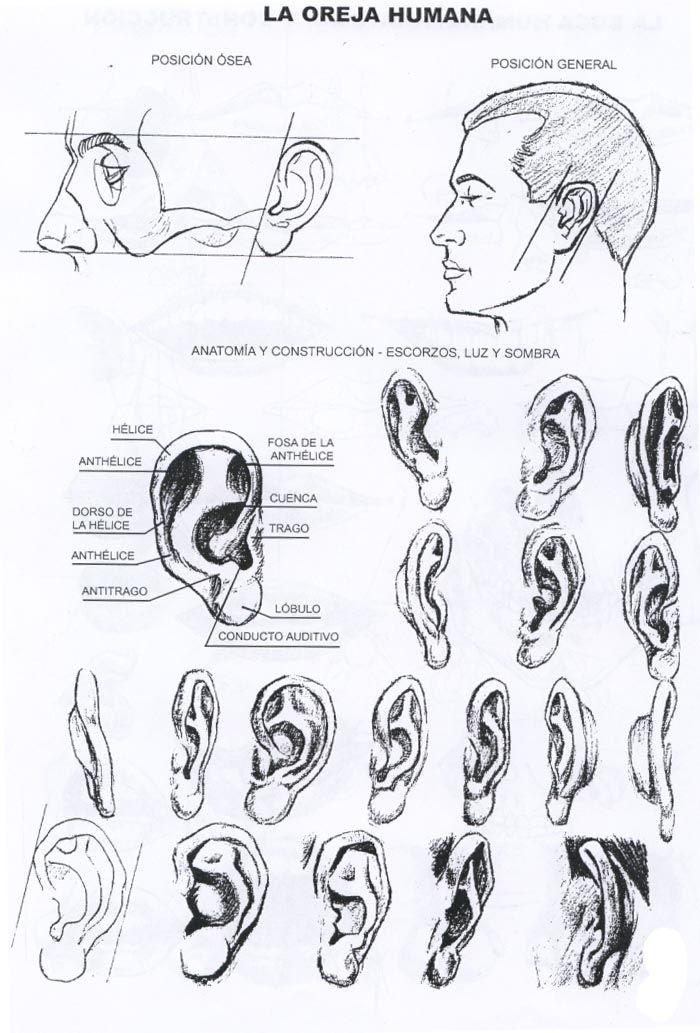 partes del rostro humano - Buscar con Google   rostro   Pinterest ...