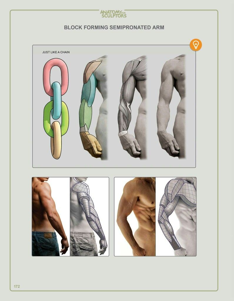 Pin by Coral Aponte on tutorial de arte | Pinterest | Anatomy, Human ...