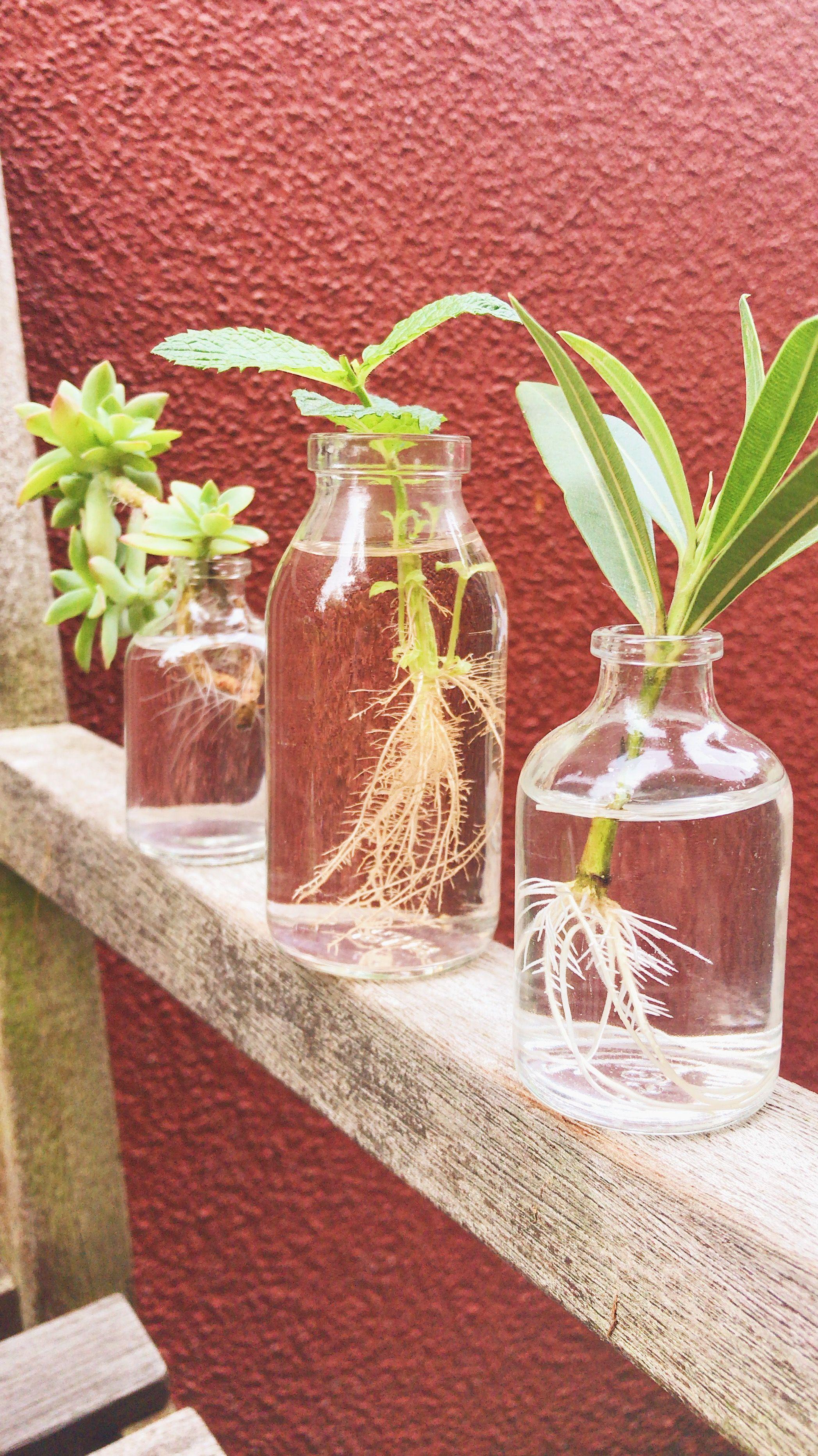 Pflanzen Ableger