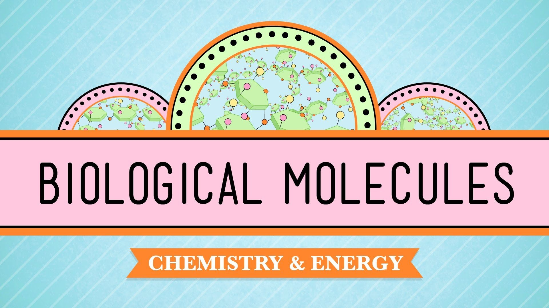 Biological molecules you are what you eat nucleic acid school biological molecules you are what you eat biology 3 fandeluxe Image collections