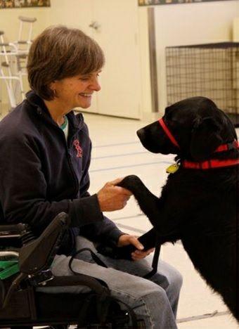 The Advantages Of Having A Service Dog Service Dogs Service