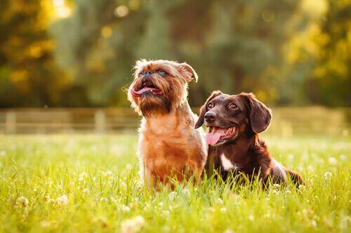 I nostri cari animali da compagnia spesso vengono colpiti dai parassiti intestinali.