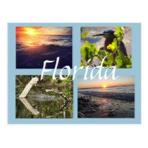 Florida Photography Postcard  Southwest Florida  Ft Myers