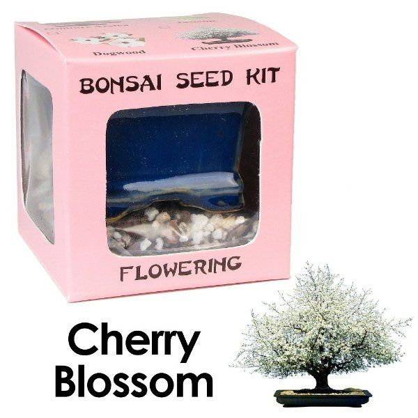 Eve S Cherry Blossom Bonsai Seed Kit Flowering Complete Kit To Grow Cherry Blossom Bonsai From Seed Amazon Grocery Gou Seed Kit Bonsai Seeds Seed Kit Gifts