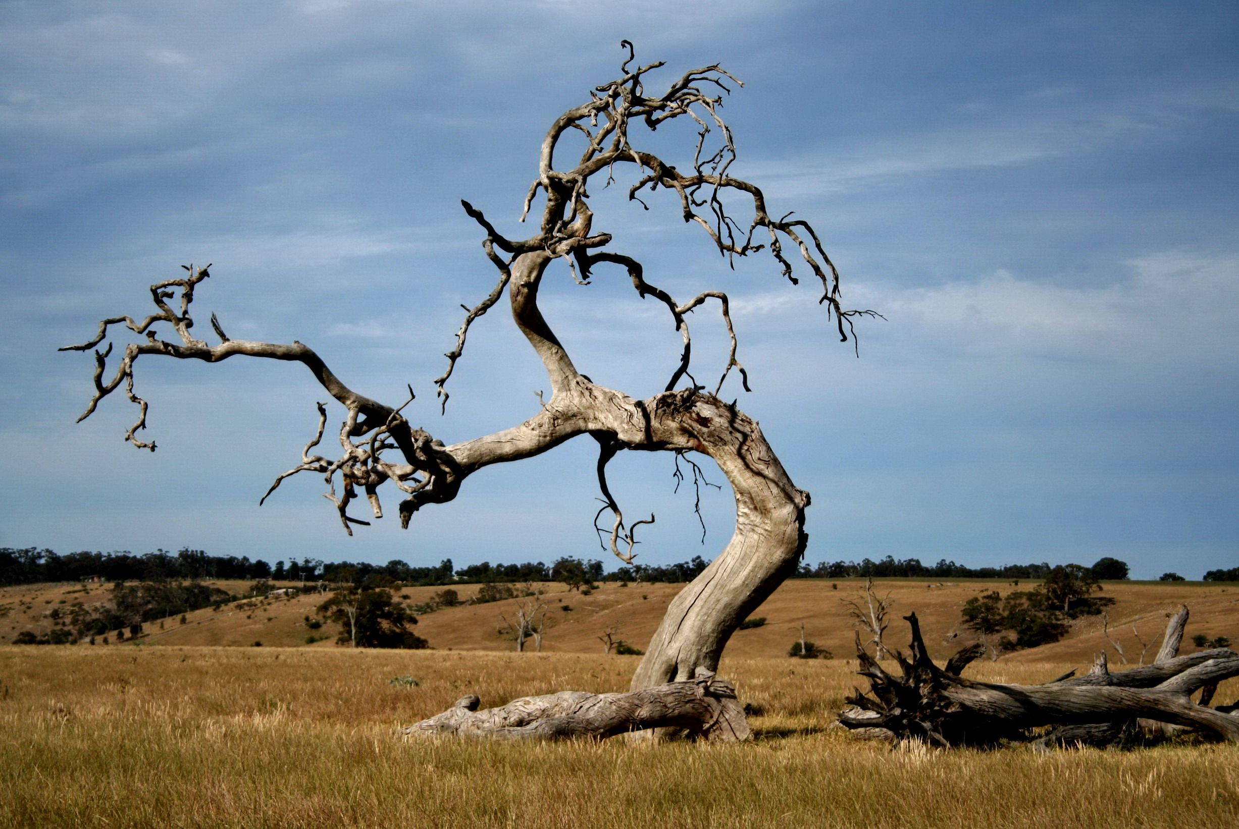 how to tell if a tree is dead or dying