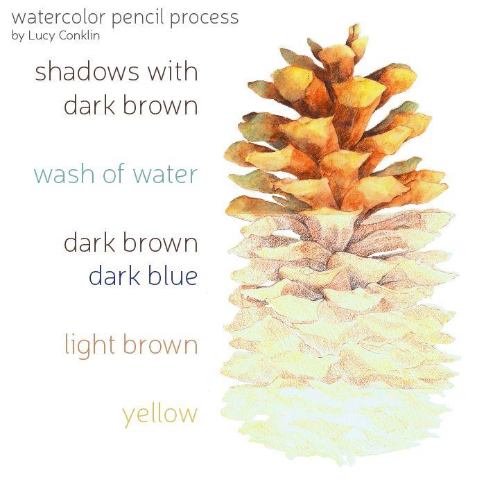 how to draw pinecone in watercolor pencil | Watercolor Pencils ...