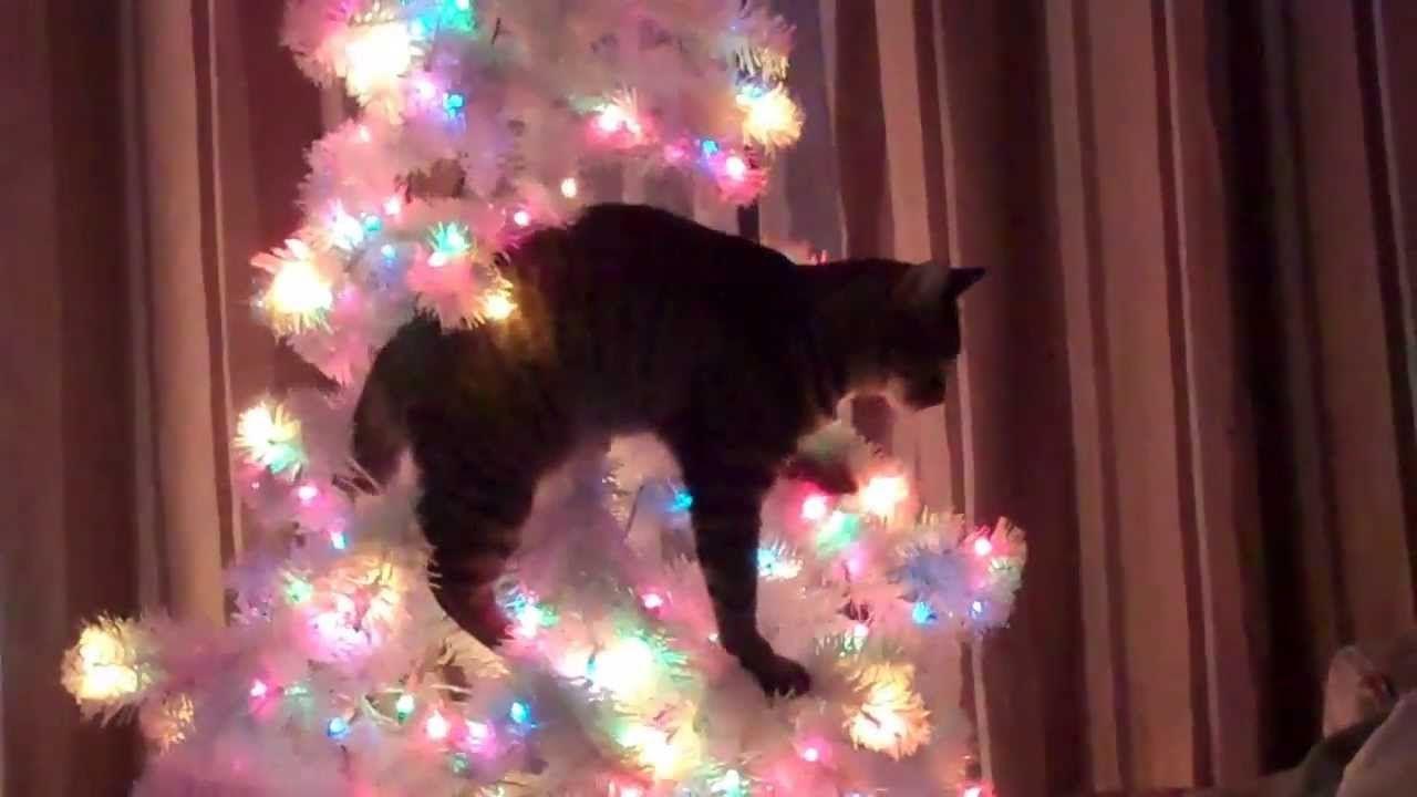 Oh Christmas Tree\