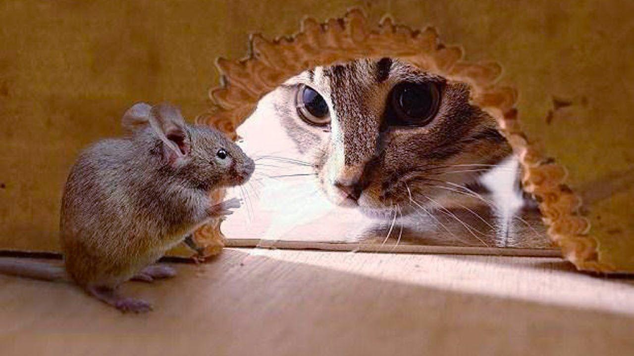 картинка кот с мышкой на голове метод