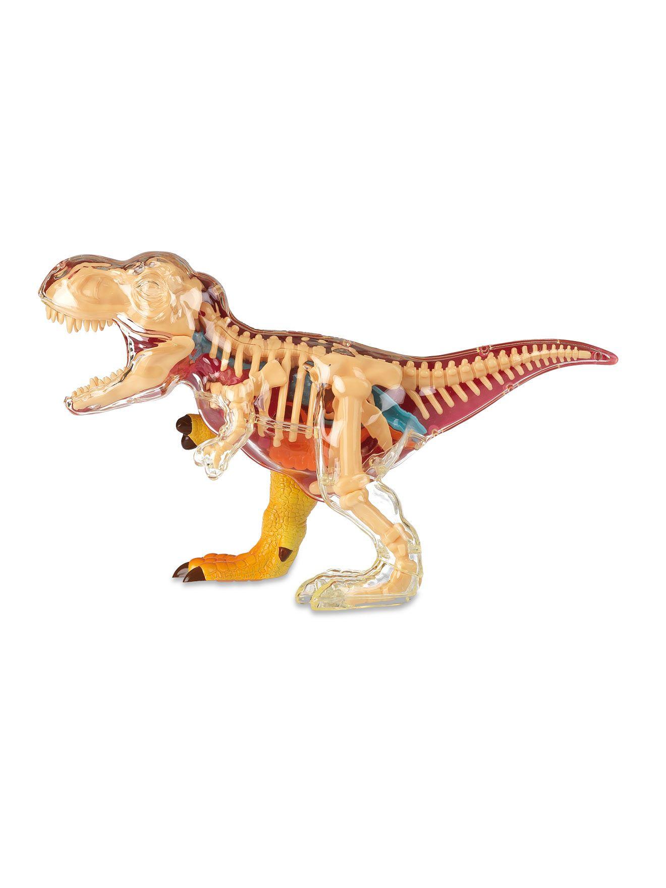 T-REX Anatomy   Petites Choses   Pinterest   Anatomy
