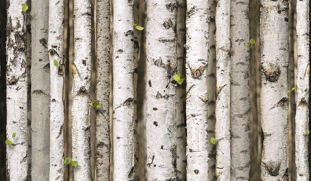 grandeco birch trees